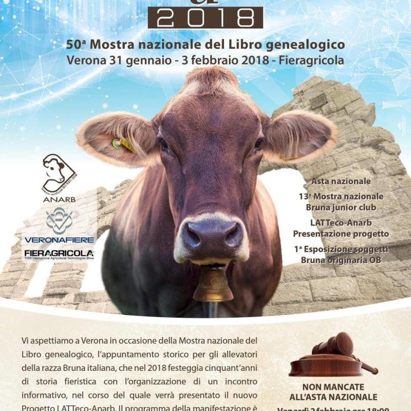 Mostra Nazionale Bruna 2018  - prima rappresentanza OB